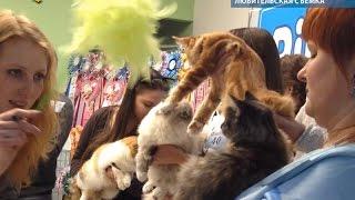 Ласковые гиганты мэйн-куны. Международная выставка кошек