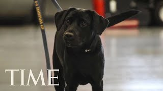 CIA Fires Dog Since Sniffing Bombs Wasn