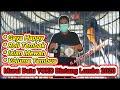 Murai Batu Juara Nasional  Aksi Gacor Nembak Variasi Isian Yoko Stabil Juara  Mp3 - Mp4 Download