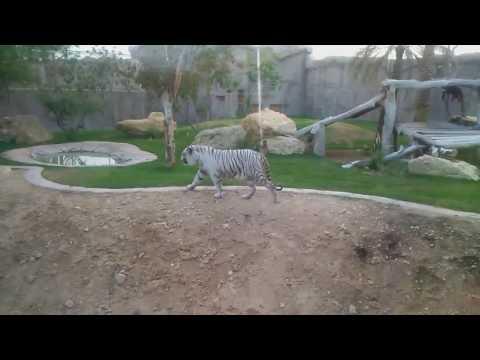 #Alain #Zoo visit #UAE