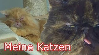 Das Leben meiner Tierheim Katzen.