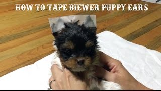 How to tape Biewer Puppy Ears
