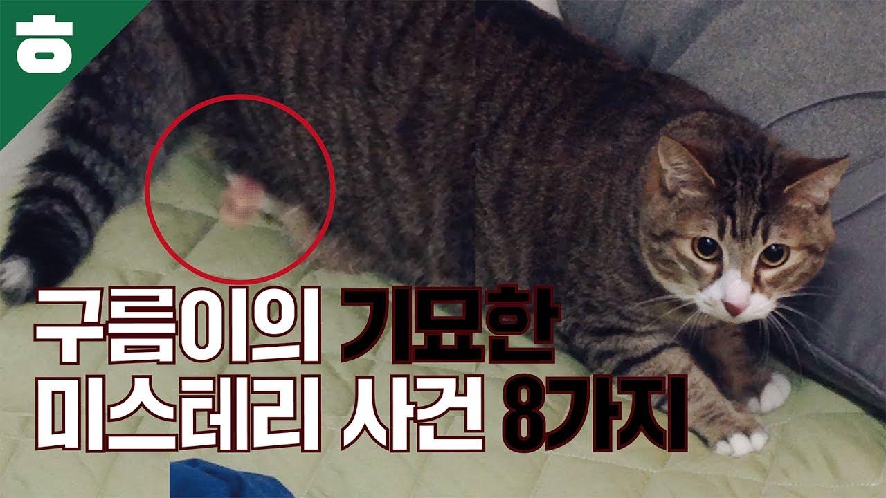 Hemtube S Cat