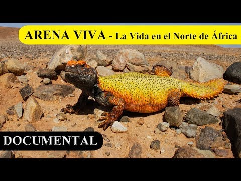 ARENA VIVA - Documental completo HD // Castellano/English - Raulophis & Manuel Soto