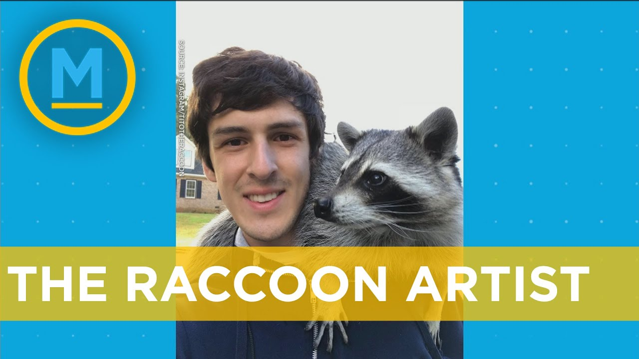 This raccoon's paintings sell for $100 each | Your Morning