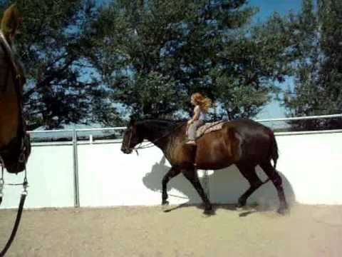 Sianna & Cessna - 3 year old girl riding 16.3 hand horse