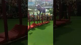 Surya sakti lion dance performance grand mall bekasi