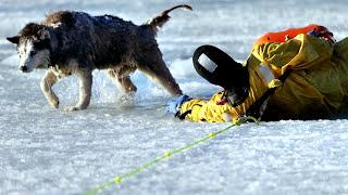 Трогательные и наидобрейшие поступки, спасения животных