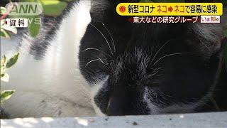 ネコ→ネコのコロナ感染は容易 明らかな症状なし(20/05/14)