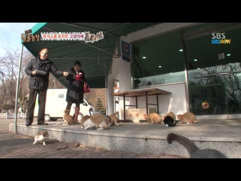 SBS [동물농장] - 휴게소를 포위한 고양이떼