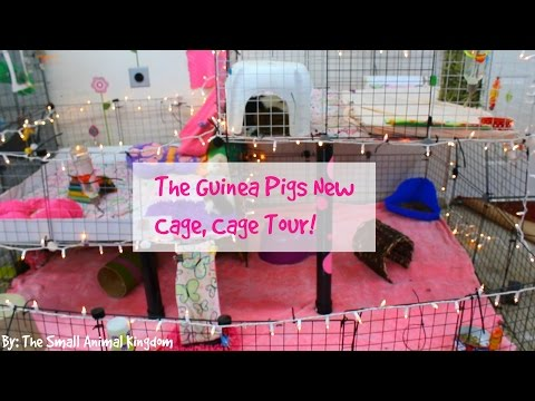 The Guinea Pigs New Cage, Cage Tour!  | Small Animal Kingdom |