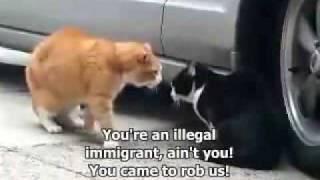 Gadajace Koty ( Crazy Talking Cat Hassle )