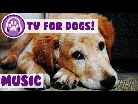 Music For Dogs To Relax To! Soothing Music To Reduce Stress And Relax Anxious Dogs! NEW 2018!