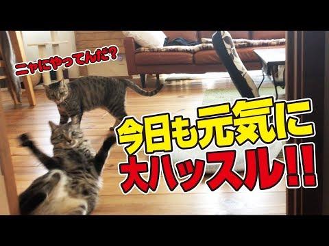 我が家の清掃監視ネコ、役目を終えた途端に大暴走!?