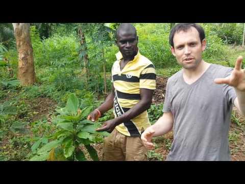 Cocoa farm children's home 'Nyamekye', Akwakwaa, Ghana