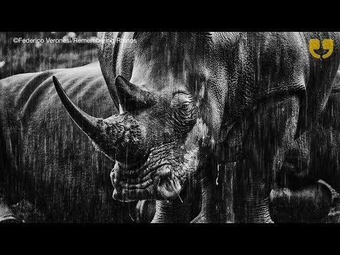 Remembering Rhinos at Royal Geographical Society by WinkBall