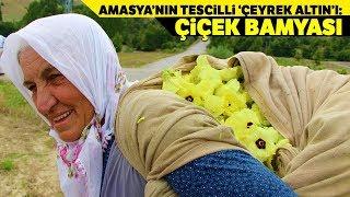 Amasya'nın Tescilli 'Çeyrek Altın'ı: 'Çiçek Bamyası'