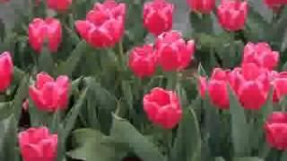 Holud bato mendi bato- Shahnaz Rahmatullah