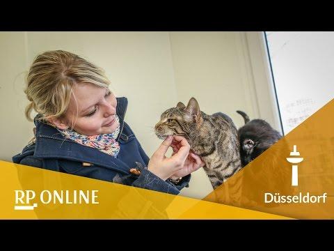 Zu Besuch Bei Den Katzen Im Tierheim Youtube