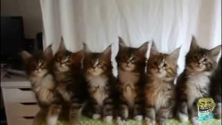 24 Подборка Смешные коты 2016 Приколы про котов с музыкой HD