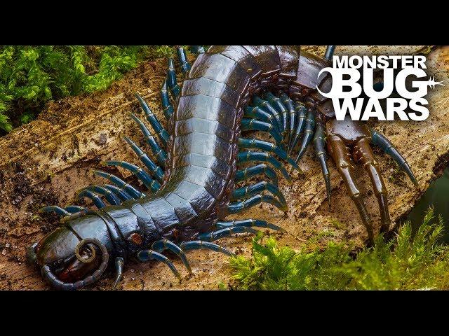 Best Centipede Showdowns   MONSTER BUG WARS