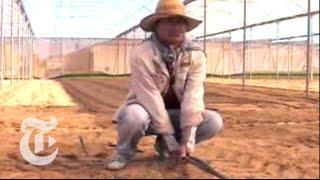 The Risks of Desert Farming | The New York Times