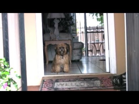 NEVER teach your dog to SIT at the front door