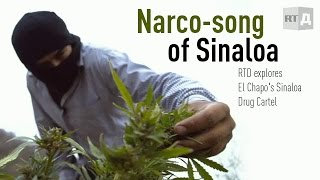 Narco song of Sinaloa. RTD explores El Chapo's Sinaloa Drug Cartel