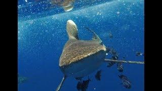 Scuba Diving Safari Egypt 2018 - Brothers, Daedalus, Elphinstone - Sea Serpent - GoPro Hero 5