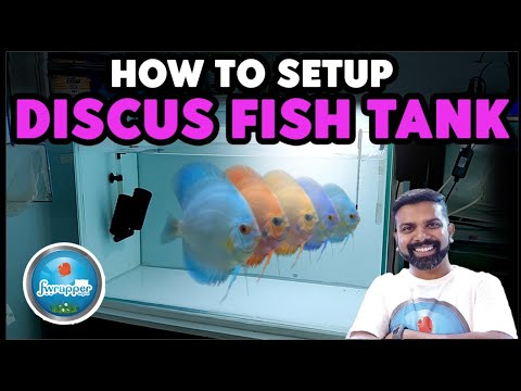 How To Setup A Discus Fish Tank
