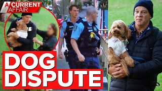 Cavoodle custody battle sees man snatch pooch in park   A Current Affair