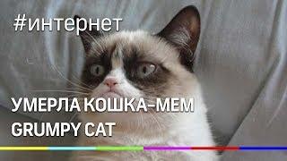 В США умерла сердитая кошка-мем Grumpy Cat