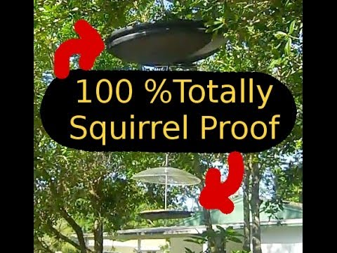 a the this most came tangentially themes dalek regular post picture who to one of keep religionprof blogs conclude will with free and feeder let birdseed that baffle out how squirrel ever your doctor squirrels bird blog me it connect effective however