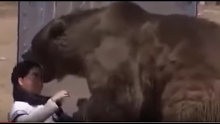 Grizzly Bear Attack - Rips Head Off on Live TV Show