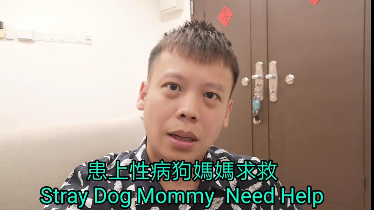 患上性病狗媽媽求救Animal Food Bank Malaysia stray dog mommy need help