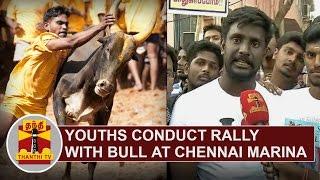 Youths conduct rally with bulls demanding permission to hold Jallikattu   Thanthi TV