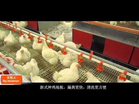 Оборудование для содержания и выращивания родительского стада бройлеров