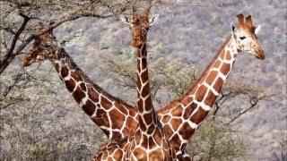 Самые смешные фотографий животных дикой природы