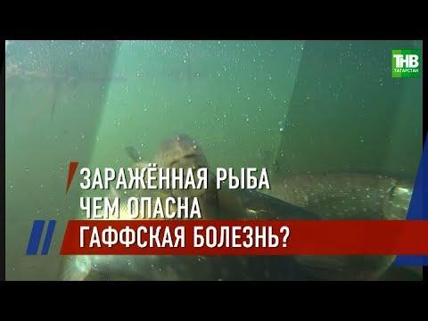 В Тюменской области - вспышка заболевания: люди заразились, съев рыбу из местного озера | ТНВ
