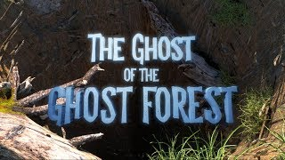 The Ghost of the Ghost Forest