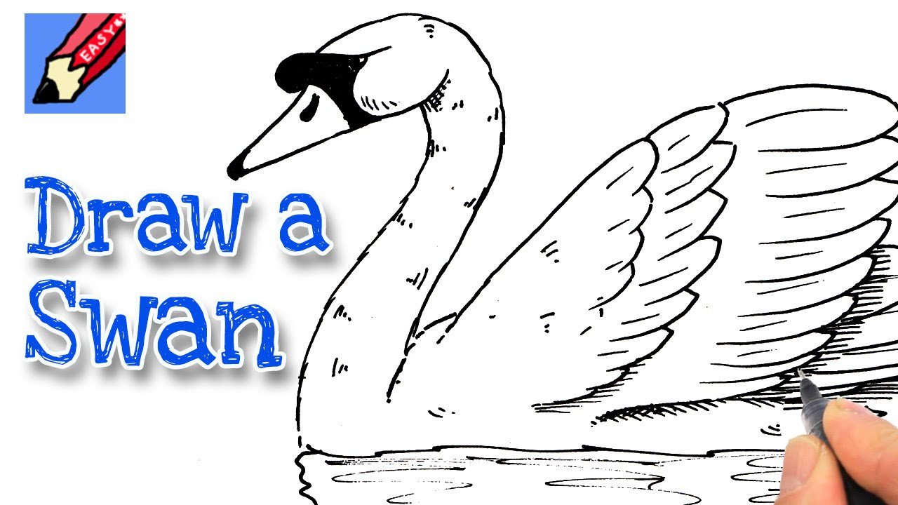 how to draw a swan youtube