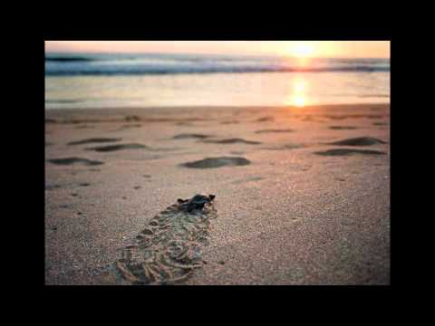 Marconi Union - We Travel