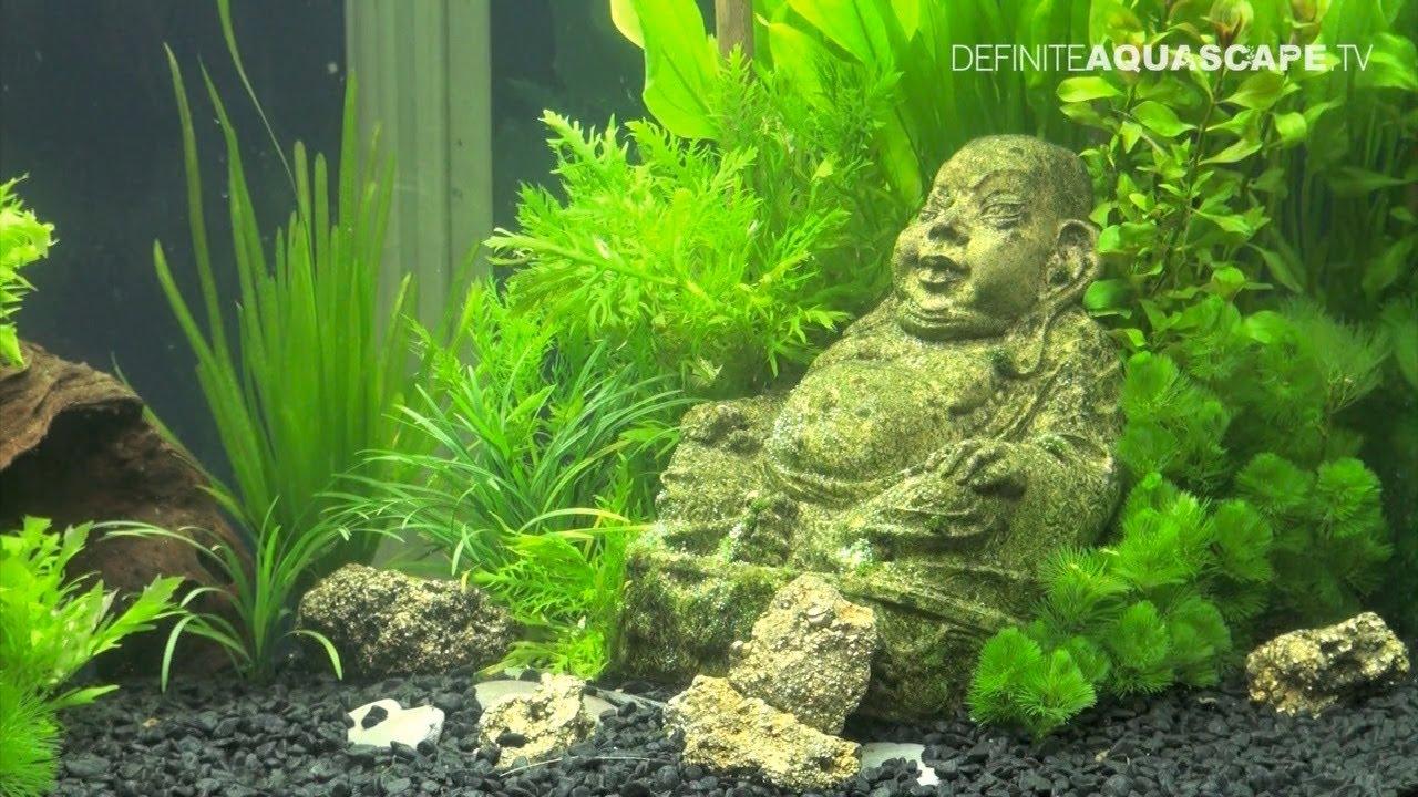 Aquascaping Aquarium Ideas : Aquascaping - Aquarium Ideas from Aquatics Live 2011, part 3 - YouTube
