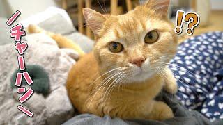 「ごはん」の一言を待ってる猫に似た言葉を掛けてみた反応が…?