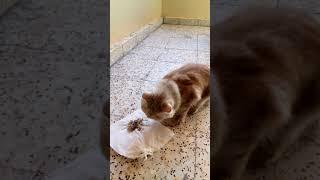 Beautiful Cat (brown Cat)