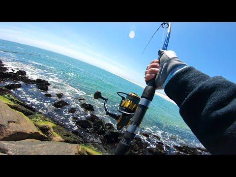 Bluefish - SO MANY - Jetty Fishing - Shinnecock Inlet -Spring 2020 Surf Fishing BIG BLUES
