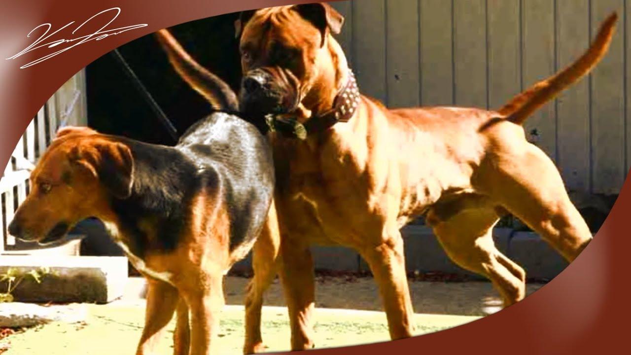 Igy latjak az allatok a vilagot 753 - A Kuty K Testbesz De Dog Body Language