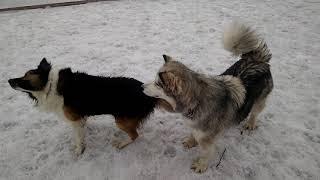 Собаки-кусаки
