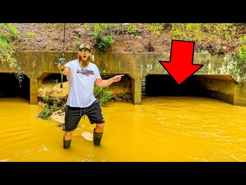 Creek Fishing UNDER A BRIDGE!! (LOADED W/ FISH!!)
