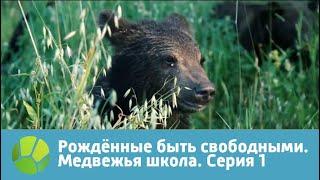 Рожденные быть свободными. Медвежья школа. Серия 1